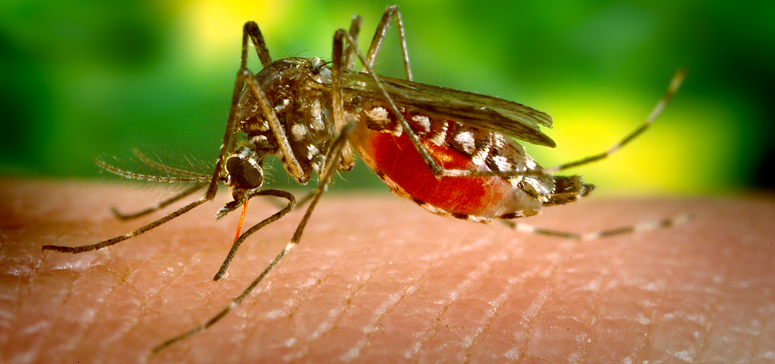 Zika-Virus-Essential-Into-Brain-Cells-ID'd-Authorizes-To-Obstruct-Contamination-And-Terminate-Cancer-Cells