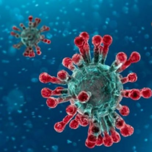 Scientists-Leave-No-Stone-Unturned-For-Advancing-Vaccine-For-Contemporary-Coronavirus
